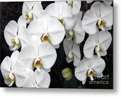 Metal Print featuring the photograph White Orchids by Debbie Hart