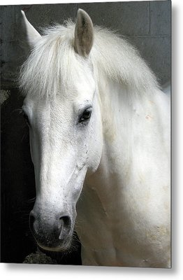 White Pony Metal Print by Sally Crossthwaite