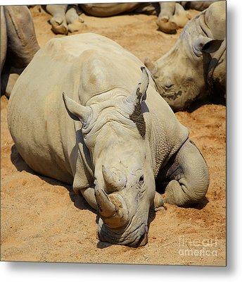 White Rhino Resting In The Sun Metal Print by Gabriela Insuratelu