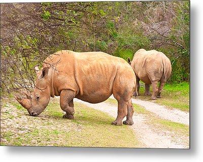 White Rhinoceros Metal Print