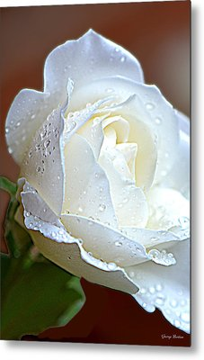 Metal Print featuring the photograph White Rose 005 by George Bostian