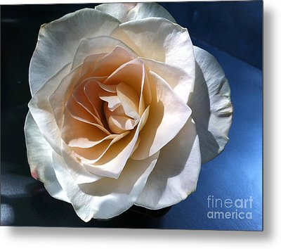 White Rose Metal Print by Addie Hocynec