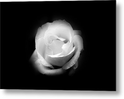 Metal Print featuring the photograph White Rose Petals by Anthony Rego