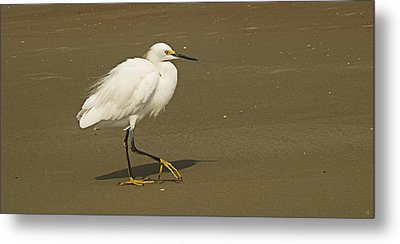 White Seabird Walking Metal Print