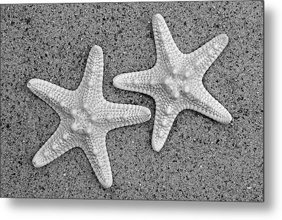 White Starfish In Black And White Metal Print by Sandi OReilly