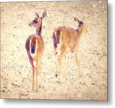White Tails In The Snow Metal Print by Amy Tyler