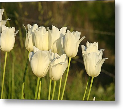 White Tulip Flowers Art Prints Spring Green Garden Metal Print by Baslee Troutman