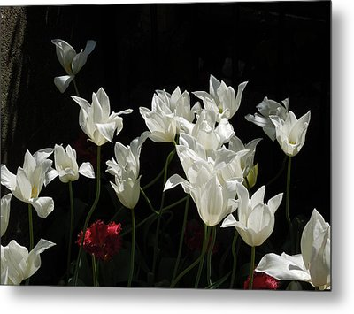 White Tulips On Black Metal Print by Peg Toliver