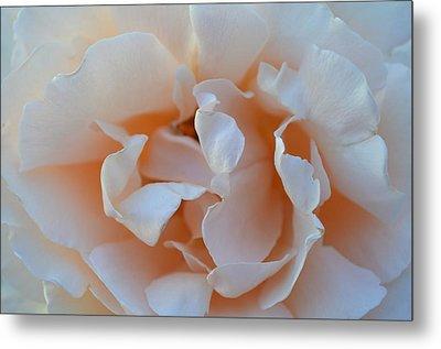 Whitest Rose Metal Print by Naomi Berhane