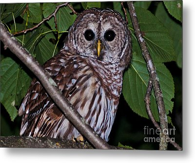 Metal Print featuring the photograph Who Are You 2 by Cheryl Baxter
