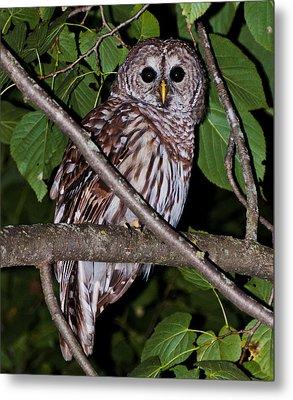 Who Are You Metal Print by Cheryl Baxter