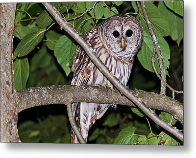 Who Are You Looking At Metal Print by Cheryl Baxter