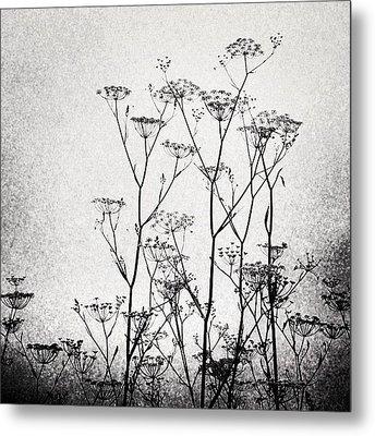 Wild Fennel #fennel Metal Print by Denise Taylor