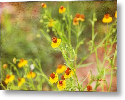 Metal Print featuring the photograph Wild Flowers by Joan Bertucci