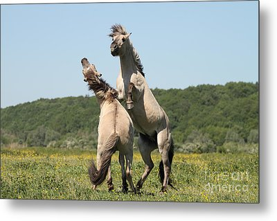 Wild Horses Metal Print by Masterbrickert Photography