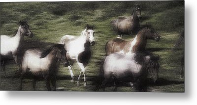 Wild Horses On The Move Metal Print by Don Hammond