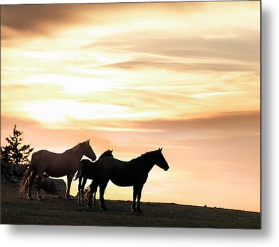 Wild Horses Sunset 3 Metal Print by Leland D Howard