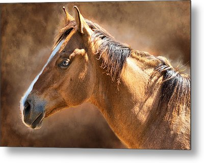 Wild Mustang Metal Print by Mary Almond