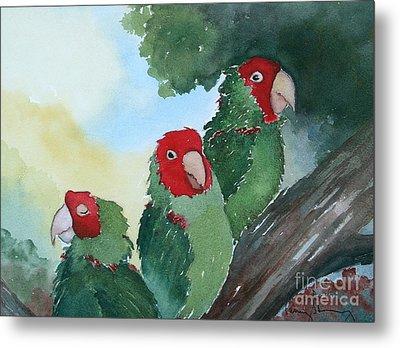 Wild Parrots Of Telegraph Hill Metal Print