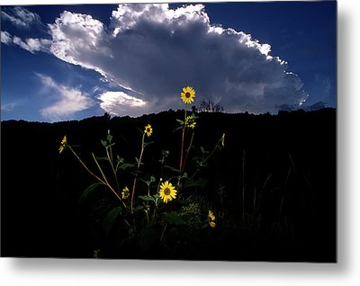 Wild Sunflower With Clouds Metal Print