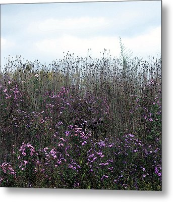 Wildflower Meadow At Markin Glen Metal Print