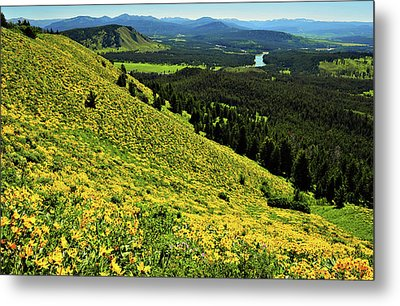 Wildflower Mountain In Wyoming Metal Print by Jeff R Clow