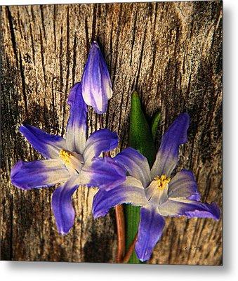 Wildflowers On Wood Metal Print
