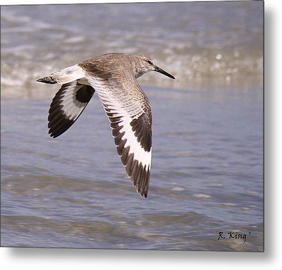 Willet In Flight Metal Print