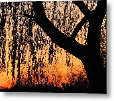 Willow At Sunset Metal Print by Valia Bradshaw
