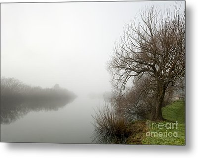 Willow In Fog Metal Print