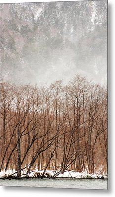 Willow Trees In Winter At Kamikochi Metal Print by Skye Hohmann
