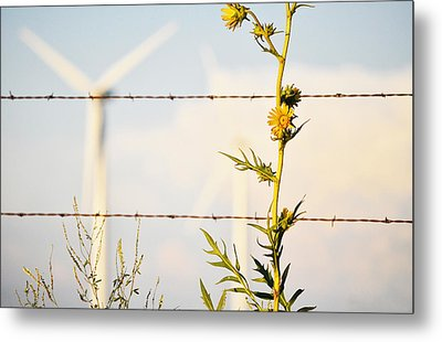 Metal Print featuring the photograph Wind Blown by Brian Duram