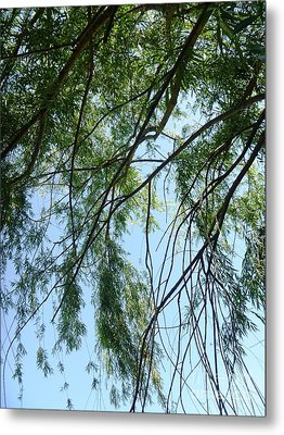 Wind In The Willow Metal Print by Alys Caviness-Gober