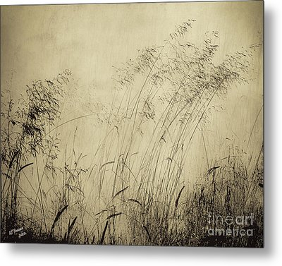 Windblown Metal Print by Arne Hansen