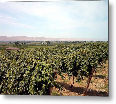 Wine Country Metal Print by Charles Robinson