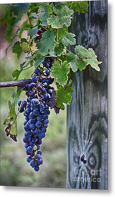 Metal Print featuring the photograph Winery Harvest by Vicki DeVico