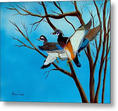 Wingin'  It Metal Print by Fram Cama