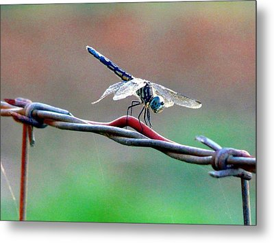 Wings Of Wire Metal Print