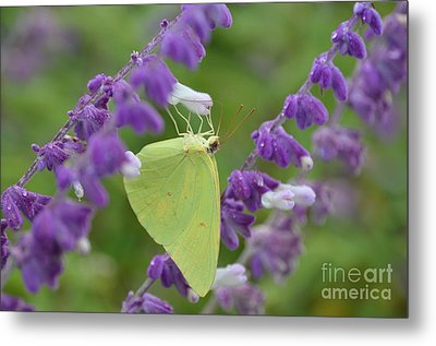 Wings Of Yellow Metal Print by Kathy Gibbons