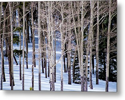 Metal Print featuring the photograph Winter Aspens by Colleen Coccia
