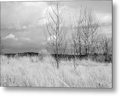Metal Print featuring the photograph Winter Bare by Kathleen Grace
