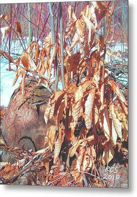 Winter Beech Metal Print by Richard Stevens
