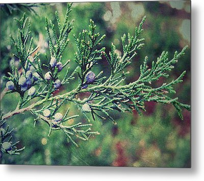 Metal Print featuring the photograph Winter Berries by Robin Dickinson