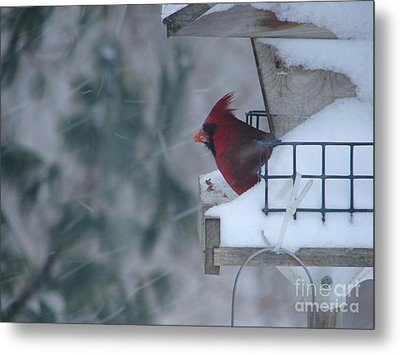 Winter Cardinal Metal Print by Ronald Tseng
