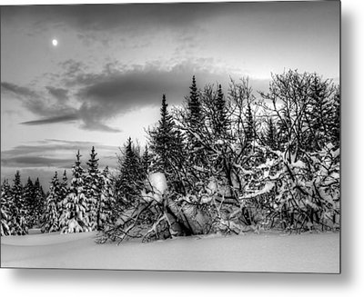 Metal Print featuring the photograph Winter Evening by Michele Cornelius