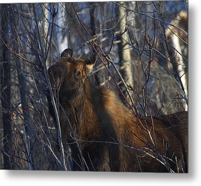 Metal Print featuring the photograph Winter Food by Doug Lloyd