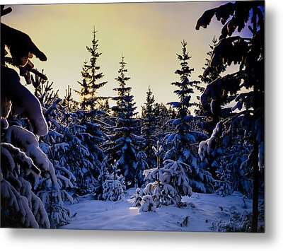 Winter Forest Metal Print by Hakon Soreide