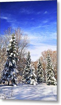 Winter Forest Under Snow Metal Print