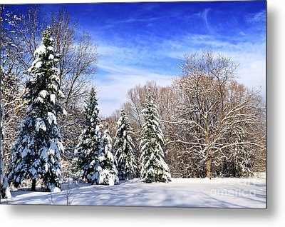 Winter Forest With Snow Metal Print by Elena Elisseeva