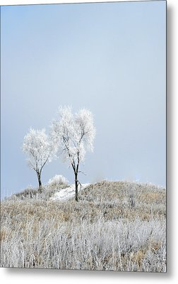 Winter Frost Metal Print by Julie Palencia